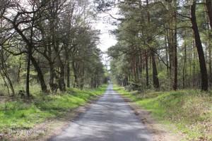 Waldweg Hatten-Munderloh